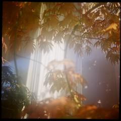 Afternoon glow (VLBPhotography) Tags: paris france mediumformat 66 120film domestic tests kodakportra400 frreslumire squarephotography lumirecamera frencholdcameras lumireflex spector80mmf45