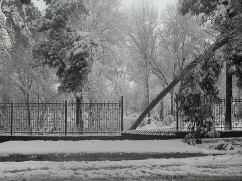 Последствия снегопада в Курган-тюбе (12)