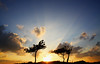 2249 (s▲ul gm) Tags: trees sunset sky españa sun sol backlight clouds contraluz landscape atardecer evening spain árboles asturias paisaje pines cielo nubes rays puestadesol pinos siluetas perlora tarde rayos carreño asturies
