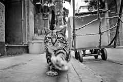 Play (Ding Yuin Shan) Tags: leica cute cat blackwhite furry 28mm kitty hong kong wan asph m9 sheung elmarit flickraward thecatwhoturnedonandoff dingyuinshan