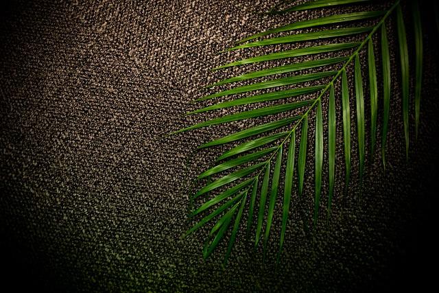 Palm | 1J6C9135