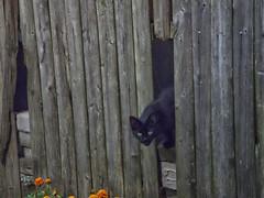 Hissssss!! (Phyllis Featherstone) Tags: saratoga springs