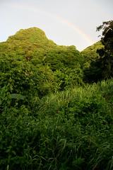my morning rainbow (lau_rie) Tags: morning dutch island saba rainbow foliage tropical caribbean lush netherlandsantilles rainforrest westindies