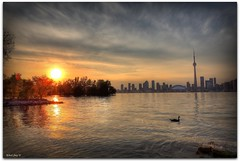 Goose at Dusk (michael sharp2009) Tags: sunset toronto water skyline canon cntower dusk goose torontoisland lakeontario centreisland torontoskyline rubyphotographer dontworrybehappy mygearandme mygearandmepremium mygearandmebronze mygearandmesilver mygearandmegold mygearandmeplatinum mygearandmediamond ruby10 ruby5 galleryoffantasticshots rememberthatmomentlevel4 rememberthatmomentlevel1 rememberthatmomentlevel2 rememberthatmomentlevel3 rememberthatmomentlevel7 rememberthatmomentlevel9 rememberthatmomentlevel5 rememberthatmomentlevel6 rememberthatmomentlevel8 rememberthatmomentlevel10