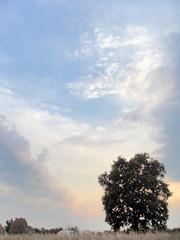 just above & all around (AleksandraMicic) Tags: photographs images sky clouds tree scenery landscape inspiration song poetry poem aleksandramicic 7dwf poezija photo pejzaz slike slika drvo oblaci nebo image photography inspiracija outdoor micicart micicartstudio