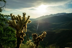 Blackett's Ridge (dennyforreal) Tags: arizona cactus tucson cholla sabinocanyon teddybearcholla blackettsridge