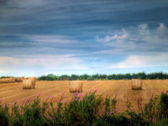Day 228 of 366 Rolling (Chris Willis 10) Tags: rolls hay bales hdr rolling photo366