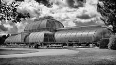 Kew Gardens (Saving Private Emily) Tags: nikon 50mm f14 afs g nikkor d800 kewgardens nikon50mmf14afsgnikkor nikond800 richmond england unitedkingdom nik silver efex pro 2 kew garden london royal botanic gardens