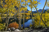 Peaking Through the Aspens (Darvin Atkeson) Tags: california travel autumn vacation sabrina lake fall colors reflections landscape fishing nikon october fishermen aspen bishop 395 darvin atkeson darv liquidmoonlightcom lynneal d800e