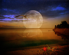 (pinktigger) Tags: red sea sky moon broken rose clouds photoshop stars bottle sensational stork thegalaxy frameit bestcapturesaoi mygearandme flickrbronzetrophygroup rememberthatmomentlevel1 rememberthatmomentlevel2 rememberthatmomentlevel3 the~wonders~of~nature me2youphotographylevel1 freedomtosoarlevel1birdphotosonly vigilantphotographersunite vpu2 vpu3 vpu4 vpu5 vpu6 vpu7 vpu8 vpu9 vpu10