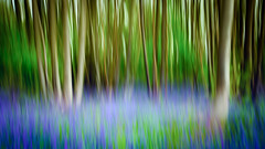 Bluebell Woods (Scott Baldock Photography) Tags: street wood uk flowers blue trees light abstract motion blur tree green art bluebells forest landscape countryside blurry woods nikon purple shot angle image streak wide creative lilac bloom panning effect bluebell essex bellhouse lightroom in billericay ramsden d7000 norsley scottbaldockphotography
