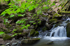 enchanted little valley 4 (Henry der Mops) Tags: green creek germany deutschland spring stream bach valley grün wald gree frühling waldalgesheim canonlens24105mm canoneos6d unescoworldheritageuppermiddlerhinevalley henrydermops mplez