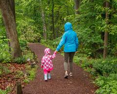 A Walk in the Rain (Karol A Olson) Tags: green wet rain dc washington spring woods path ferns raincoat rainwear nationalarboretum may16 116picturesin2016 8rainwear