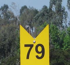 79 doty Metrolink (pieplate) Tags: numbers doty 79 gamespeopleplay