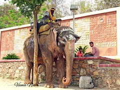 Laxmi, the elephant (Veena Nair Photography) Tags: people india elephant texture wall lakshmi faith streetphotography rajasthan udaipur streetshot mahout travelphotography travelshot veenanairphotography laxmitheelephant paintedelephantudaipur