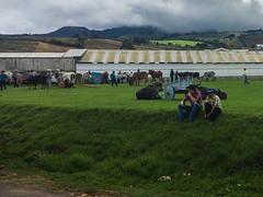 "Tierra Blanca: foire aux bestiaux <a style=""margin-left:10px; font-size:0.8em;"" href=""http://www.flickr.com/photos/127723101@N04/26787258930/"" target=""_blank"">@flickr</a>"