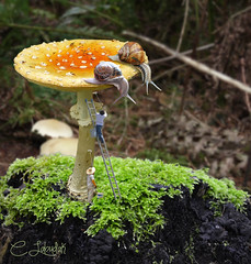 SnailMushroom (clabudak) Tags: art forest landscape mushrooms moss artwork artistic surreal ladder snails painters