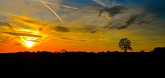 Gnosall sunset (Ugborough Exile) Tags: uk nikon staffordshire midlands stafford 2016 gnosall treesdiestandingup d7000