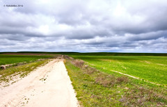 paisaje 88 (rokobilbo) Tags: sky sun green clouds landscape countryside meadow land planting castilla