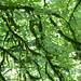 urban rain forest (nosha) Tags: