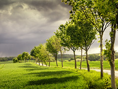 Spring Rain (parkerbernd) Tags: road trees light sunset sky green nature rain ahead backlight clouds landscape lumix spring alley track day hole path country dramatic panasonic explore rainy fields showers acre mv cloudburst mecklenburgvorpommern gx1