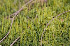 Tiny Flora (K.G.Hawes) Tags: park plants plant macro green closeup moss flora mossy mosses