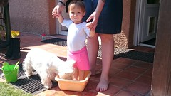 Partage.... (LILI 296....) Tags: baby duo humor westie humour bb fillette maelys bassine