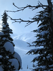 Flute through the trees (Ruth and Dave) Tags: mountain snow weather whistler framed flute powder evergreen skiresort slope conifer whistlerblackcomb flutebowl weatherphotography fluteridge
