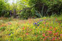 Gated Wildflowers