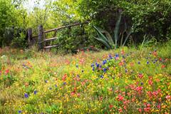 Gated Wildflowers