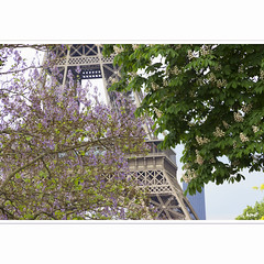 Springtime in Paris (horstmall) Tags: paris france tower architecture fleurs spring frankreich tour steel blossoms eiffeltower montmartre toureiffel architektur turm eiffelturm trocadero printemps fer frhling blten stahl horstmall