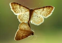 butterflies sex (stempel*) Tags: polska poland polen polonia pentax k30 50mm gambezia macro makro
