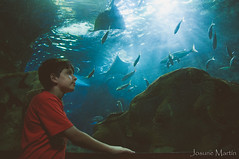 """45/365: sumergido..."" (Josune Martin) Tags: pez mar donosti nio tubo acuario reflejos tiburn sansebastin"