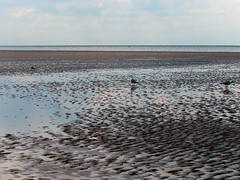 Shoreline birds (Molly Moult) Tags: sea beach birds sand gulls elle shoreline hunstanton