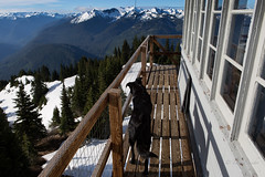 Dog on the catwalk (D. Inscho) Tags: dog washington northcascades firelookout snowkingmtn