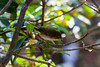 IMG_7207L4 (Sharad Medhavi) Tags: bird canoneod50d birdsandbeesoflakeshorehomes