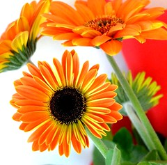 a smile,a flower, a hug,a kiss...all colourful,all yours! (dimitra_milaiou) Tags: world life red orange white black flower color colour green love me nature colors beautiful beauty smile yellow square greek happy intense nikon hug kiss europe bokeh d walk sunday hellas happiness spot athens greece together format shape pure 90 carre dimitra d90  fantasticnature         milaiou