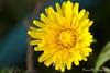 DDflowers-7