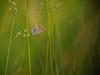 Boglárka (Bernadett Szalai) Tags: geotagged lumix hungary natural panasonic g2 wow1 m43 szekesfehervar heartawards blinkagain flickrstruereflection1