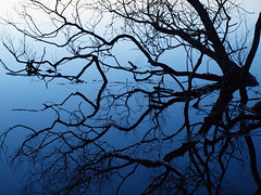 Sunset Tree (Axiraa - back soon) Tags: blue sunset sky lake tree water puu baum saadjrv tartumaa vanagram estopia