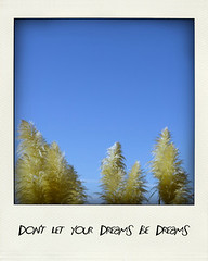 P01 Don't let your dreams be dreams. -- Jack Johnson by Hakulau (Hakulau) Tags: flowers newzealand tree vintage polaroid photography hawaii spring surf fotografie heart waikiki oahu blossom quote sydney australia surfing auckland hibiscus crater fotos palmtree ferriswheel prints skytower honolulu surfboards australien etsy countyfair jackjohnson neuseeland sydneyoperahouse mounteden piha fineartphotography centrepointtower druck flowerphotos flowerphotograph polaroidphotography newzealandphotos strandfotos beachphotos etsyshop hawaiiphotography blumenfotos neuseelandfotos nurserydecor hawaiiphotos sydneyphotos nurseryart toetoegrass australiaphotos etsyprints etsyphotos yarnbombing frhlingfotos hawaiifotos australienphotos sydneyfotos aucklandfotos surfingfotos carnivalphotograph zitiat hakulau hakulauetsy