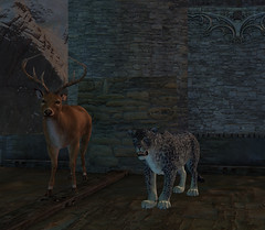 "Deer and Leopard tonics • <a style=""font-size:0.8em;"" href=""http://www.flickr.com/photos/76114232@N04/6981448612/"" target=""_blank"">View on Flickr</a>"
