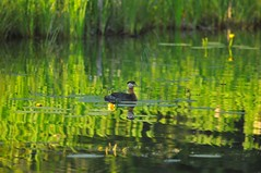DSC_5036 (Debbie Prediger Photography) Tags: camping lake photography wildlife debbie prediger