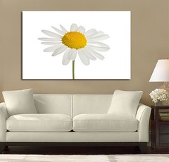 Daisy Beauty (Simply Canvas Art) Tags: art wallart flowerart homedecoration flowerprints flowercanvas flowerwallart flowercanvasprints flowercanvasart flowercanvaswallart