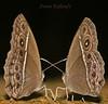 Aroon Kalandy love birds (aroon_kalandy) Tags: light india macro love nature beautiful butterfly lights couple awesome kerala greatshot romantic lovely tamron majestic calicut kozhikode tamronspaf90mmf28dimacro aroonkalandy
