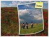 Dueñas (jacilluch) Tags: red españa flower macro fleur spain rojo europa flor blossoms rosella silvestre coquelicot papaver nwn palencia amapolas amapola cornpoppy papoula dueñas adormidera castillaleon ababol mitxoleta papuel