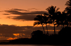 Sunset Palms (SeanWeeklyImages) Tags: ocean sunset sea orange sun seascape america canon palms skyscape landscape hawaii paradise palmtrees canon60d