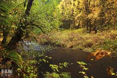 Silver Creek (Ian Sane) Tags: park autumn green fall nature water colors yellow oregon creek silver river landscape ian photography stream state image silverton ducks falls brook wilderness sane sublimity