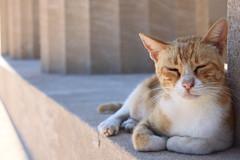 Acropolis of Lindos, Rhodes (pixiprol) Tags: cat island greek chat europa europe mediterranean ile greece gato acropolis rhodes lindos dodecanese mediteranee