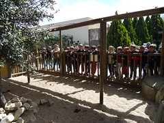 orvalle-infantil-faunia14 (15)